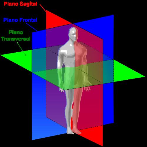 planos de movimiento del gluteo mayorplanos de movimiento del gluteo mayor